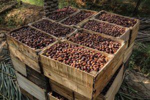 خرید خرما استعمران
