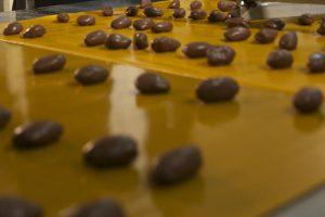 تولید خرما شکلاتی
