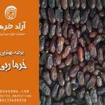نمایندگی فروش خرما ربی