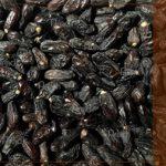 صادرات خرما ربی